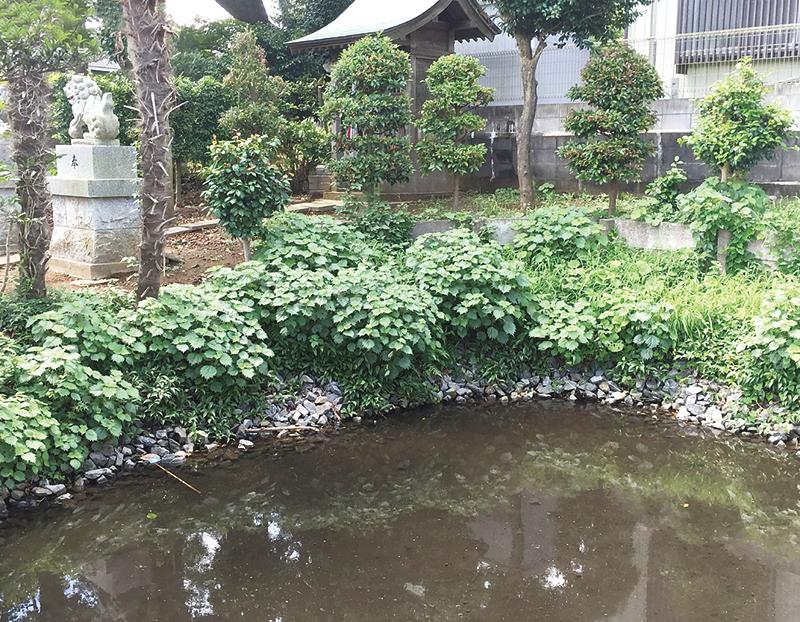 【白井市】伝説の泉が今も残る 白井市 清戸の泉・みたらしの池