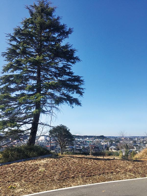 【印西市】利根川や富士山の眺めも楽しめる!木下交流の杜 歴史資料センター