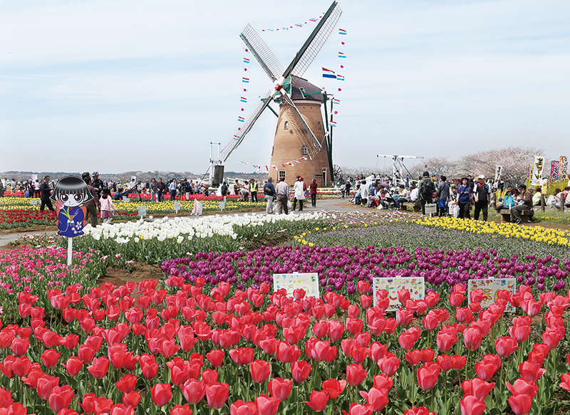 【佐倉市】春を告げる佐倉の祭典 佐倉チューリップ フェスタを 支える人たち